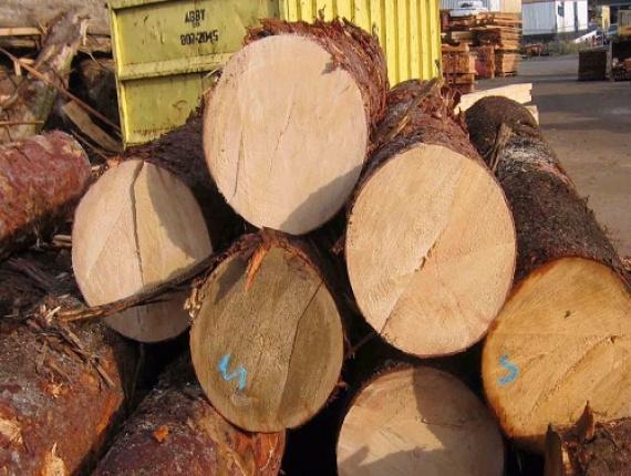 spruce pine fir veneer logs